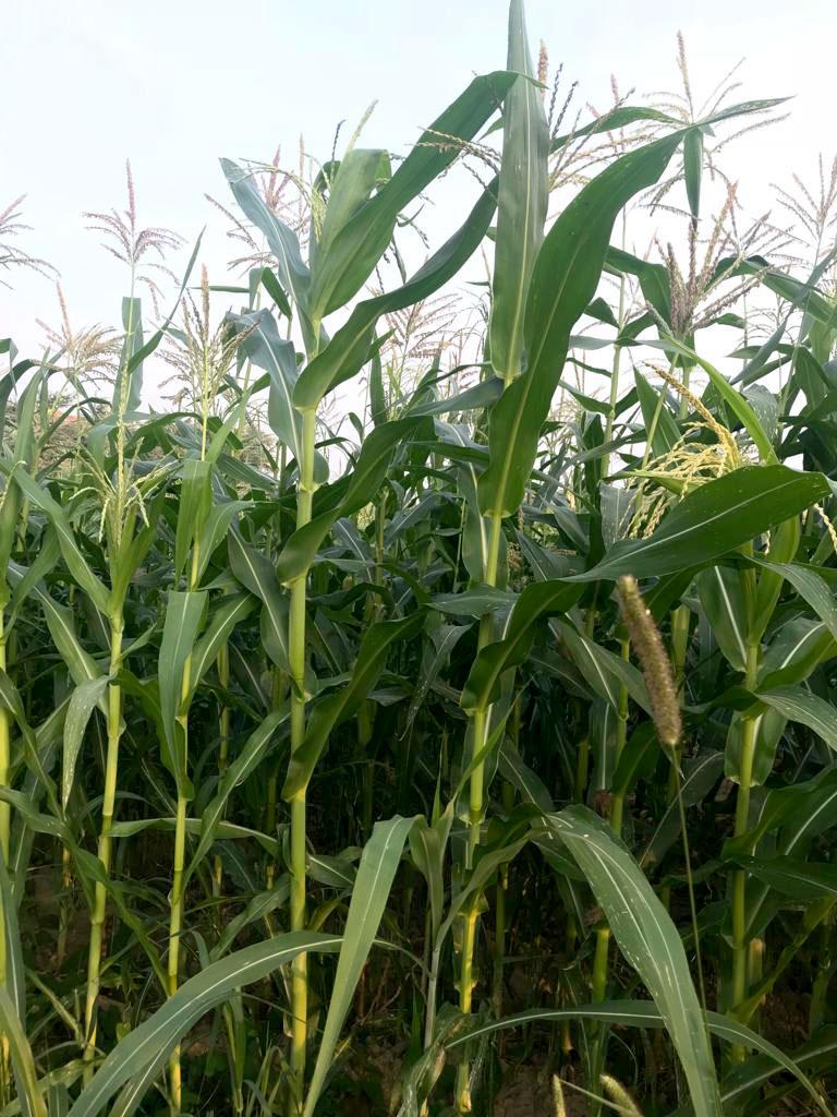 Prodotti agricoli - Società agricola Montecanto