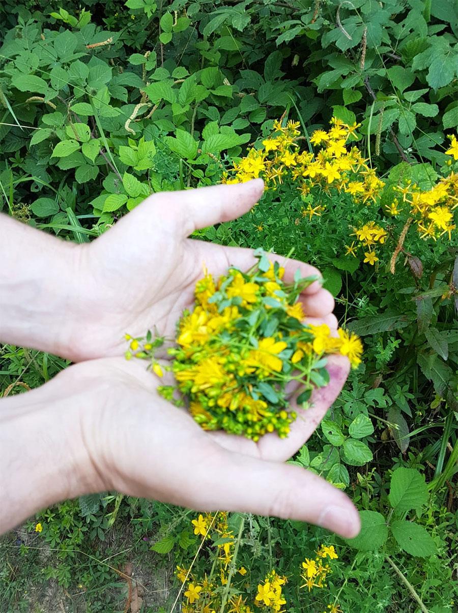 Tours sensoriali - Società agricola Montecanto